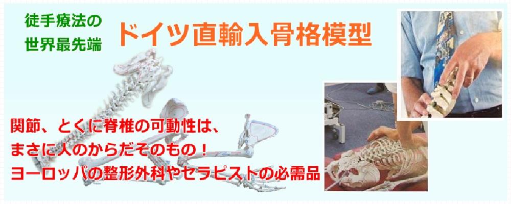 ドイツ骨模型 ヒューマンラボ